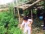 فتاه تقطف ثمار بأحد المزارع جنوب الطائف بمنطقة ثقيف