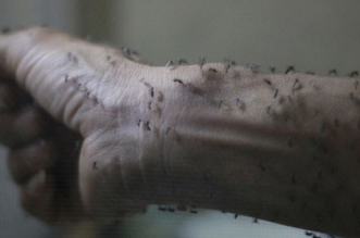 """فيروس """"زيكا"""" يُصيب أولى حالاته في #الصين - المواطن"""