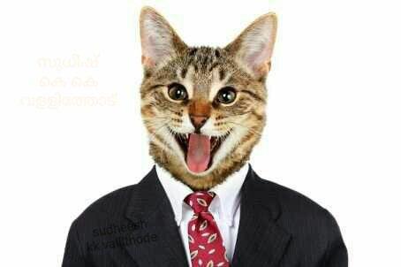 فيسبوك - قطة