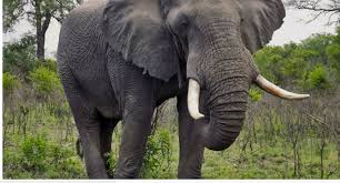 فيل يهاجم مخيمًا للروهينغا في بنغلاديش ويقتل 3 أطفال