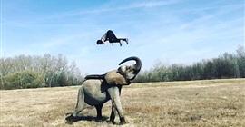 بالفيديو.. مدرب يقسو على فيل صغير خلال التدريبات يثير موجة من الغضب!! - المواطن