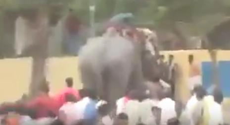 #تيوب_المواطن :فيل هائج يسحل مدربه ويهاجم الجماهير في مهرجان بالهند - المواطن