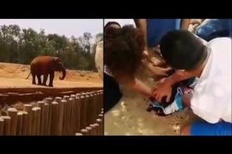 فيل يقتل طفلة مغربية