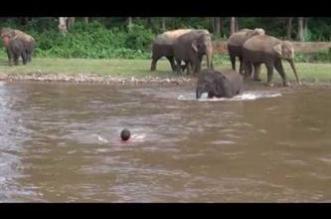 شاهد.. فيل يقفز في الماء لإنقاذ مدربه من الغرق - المواطن