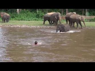 فيل ينفذ مدربه