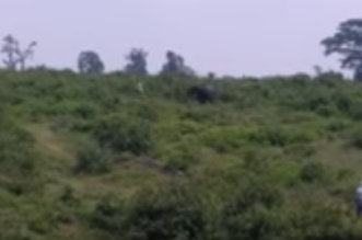 بالفيديو.. فيل يقتل سائحًا بسبب سيلفي - المواطن