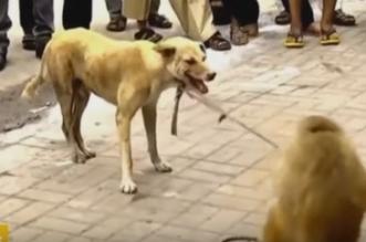 شاهد.. قرد مشاكس يضايق كلباً وكان هذا رد فعله - المواطن