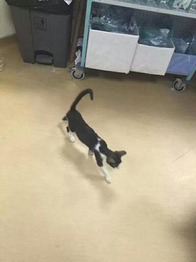 قطة-بطوارئ-بمستشفى-الخفجي