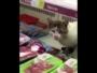 قطة داخل ثلاجة عرض لحوم بجدة