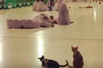 قطة في الحرم توقظ معتمرًا ليصلي