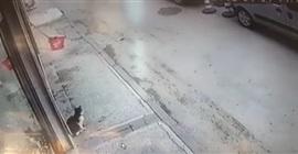 فيديو كوميدي.. قطة تضع شابًّا في موقف محرج بطريق عام - المواطن