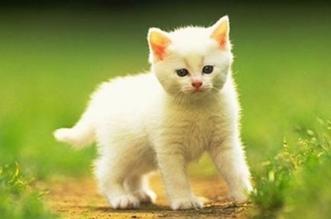 الحيوانات الأليفة تقي الأطفال من الإكزيما والربو - المواطن