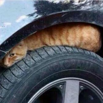 قططط سيارة برد