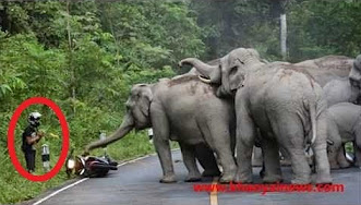 قطيع افيال يهاجم رجل