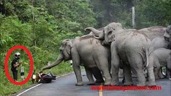 شاهد.. قطيع أفيال يهاجم رجلاً اقترب منها