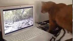 شاهد.. قط يحاول الإمساك بسنجاب داخل شاشة كمبيوتر - المواطن