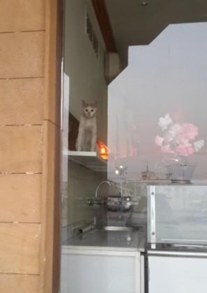 قط يتجول باشهر المطاعم (1)