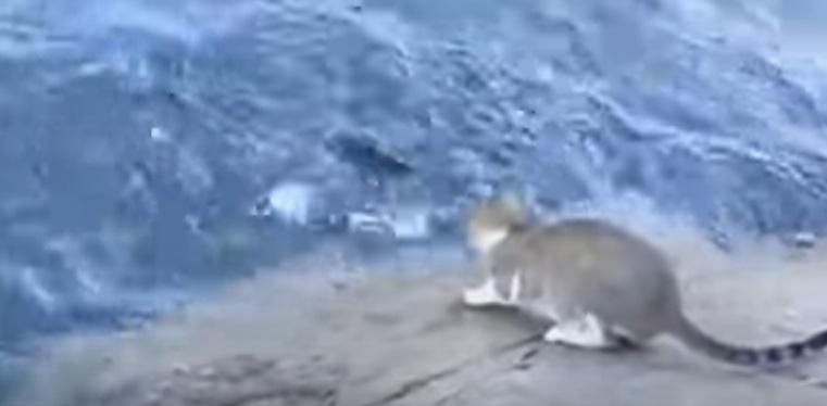 قط يصطاد سمك بمهارة فائقة