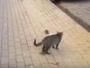 قط يهاجم فأر