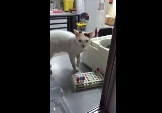 بالفيديو.. قط يتجول في مختبر مستشفى بمكة المكرمة - المواطن
