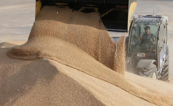 مؤسسة الحبوب تطرح مناقصة لاستيراد 720 ألف طن قمح - المواطن