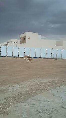 كلاب الافلاج