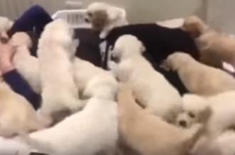 كلاب يظهرون محبتهم