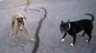 كلبان يهاجمان