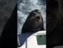 كلب بحر يقتحم مركب