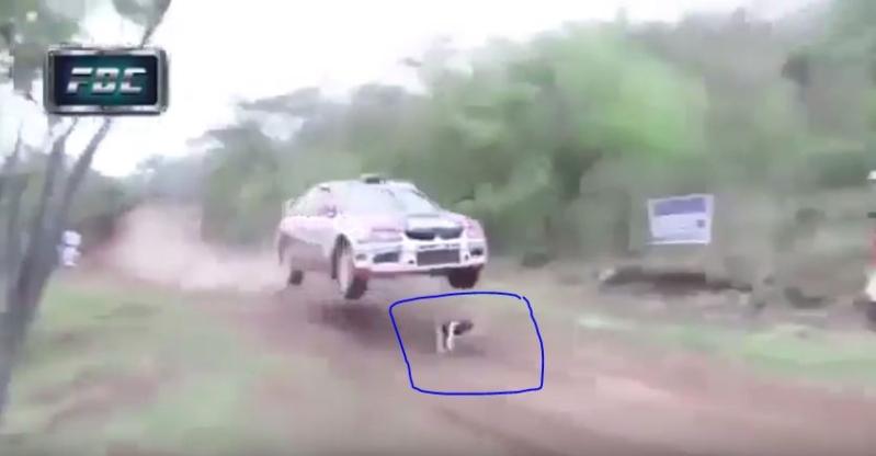 كلب حلبة سباق