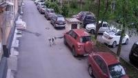 كلب-ضال-يحطم-سيارة