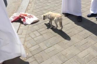 بلاغ يقود لضبط عامل حاول إدخال كلب لمطعم في المجاردة! - المواطن