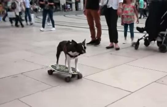 كلب يتزحلق