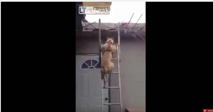 كلب يتسلق سلم