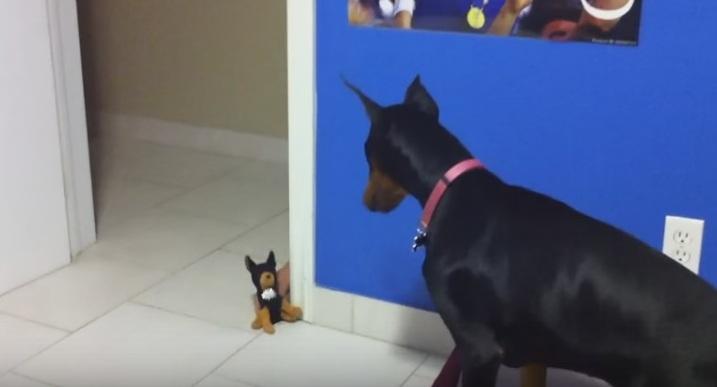 كلب يخاف من دمية