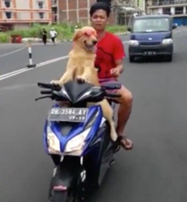 كلب يرتدي نظارات ويقود دراجة نارية