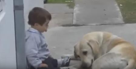 كلب يساعد طفل معاق