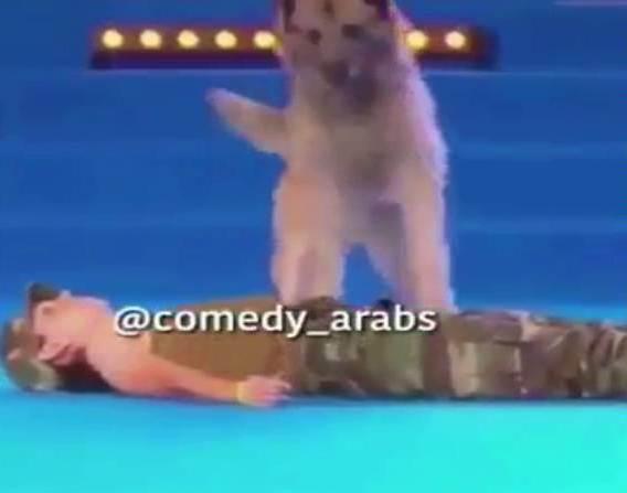 . كلب ينعش قلب صاحبته