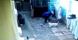 """شاهد.. لص """"منحوس"""" يتعرّض لموقفٍ مروّع في أثناء سرقة منزل - المواطن"""
