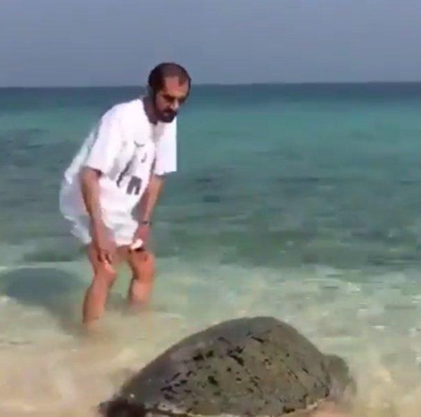 محمد بن راشد يداعب سلحفاة