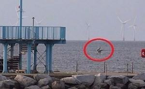 مخلوق غريب يخرج في شاطى فرنسا