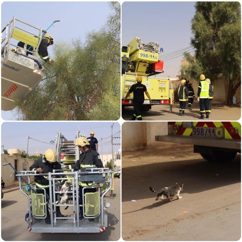 مدني الجوف يحرر قطة علقت بشجرة (1)