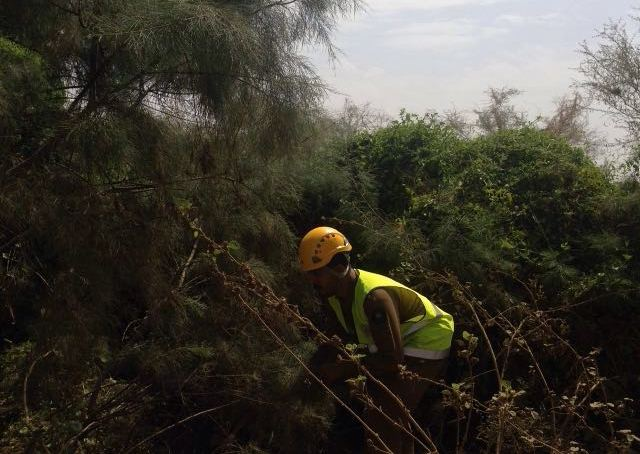 مدني جازان يمشط وادي قصي لبحث عن مفقود وتصريف مياه سد وادي بيش (9)