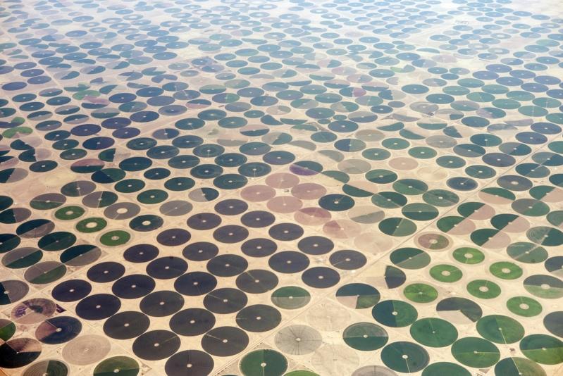 مزارع القمح في المملكة