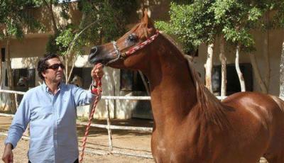 مسابقة الخيول 2