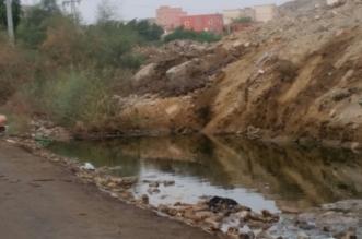 المياه الوطنية تعلق على مستنقعات منارات جدة: من اختصاص أمانات المدن - المواطن