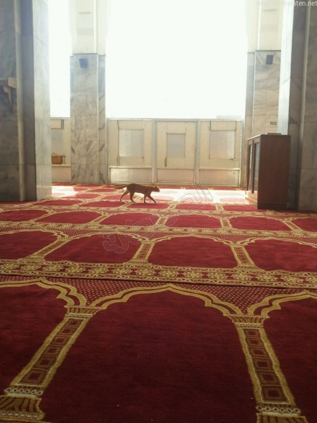 مسجد ابن عباس بالطائف