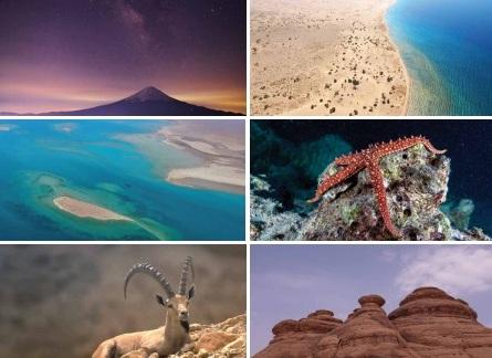 9 أسئلة مهمة وإجاباتها حول مزايا مشروع البحر الأحمر