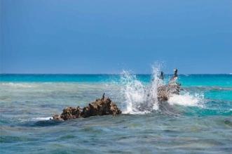 بالصور.. مشروع البحر الأحمر .. وثبة حضارية ورحلة تنزه في حدائق الشُعب المرجانية - المواطن