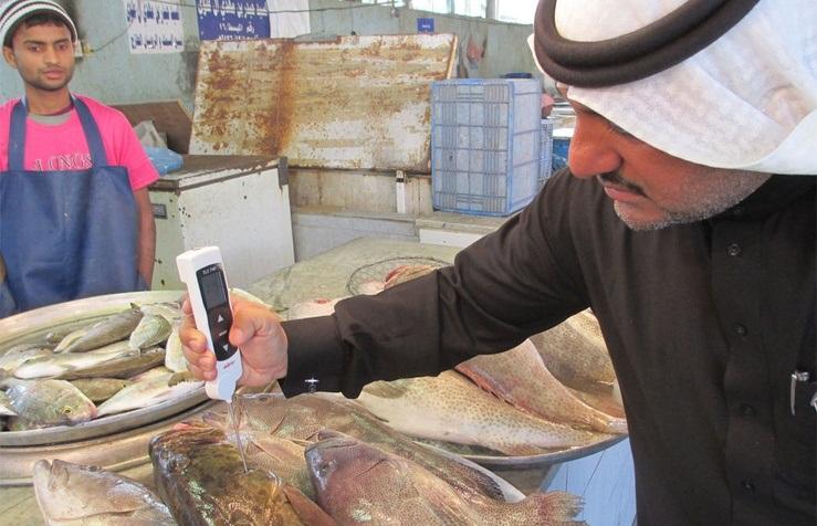 مصادرة 227 كيلو جراماً من الأسماك الفاسدة ببلدية القطيف
